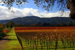 cropped-the-royal-republic-sovereingty-and-provincial-royal-state-of-california-the-fruited-plane-napa-valley-in-fall-john-morgan.jpg