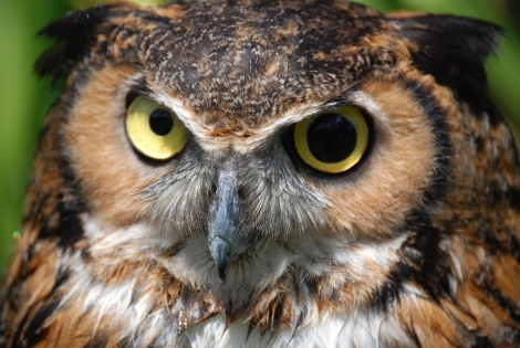 The Autonomous and Sovereign voting Theocratic Monarchy of Minnesota - the Great Horned Owl