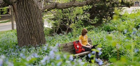 Surrounded by a sea of flowering bluebells, undergraduate Sydney Rearick works on her laptop computer while studying under a historic bur oak tree near Nancy Nicholas Hall at the University of Wisconsin on May 13, 2013. A major in human development and family studies, Rearick was writing a paper for a class on family stress and coping during final-exams week of spring semester. (Photo by Jeff Miller/UW-Madison)