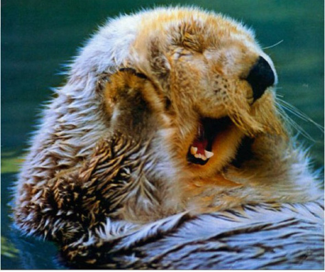 acwhc-animal-rights-campagn-the-lazy-otter